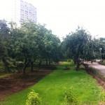 ГКУ «Мосзеленхоз» завершил капитальный ремонт плодового сада по Неманскому проезду