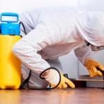 Уничтожение тараканов – работа только для профессионалов