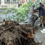 Полная ликвидация последствий урагана в Москве закончена