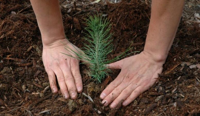 Акция «Миллион деревьев»: сделаем город зеленым!