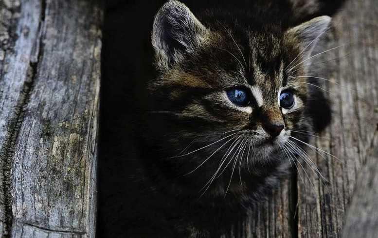 Для бездомных московских кошек организуют теплую зимовку