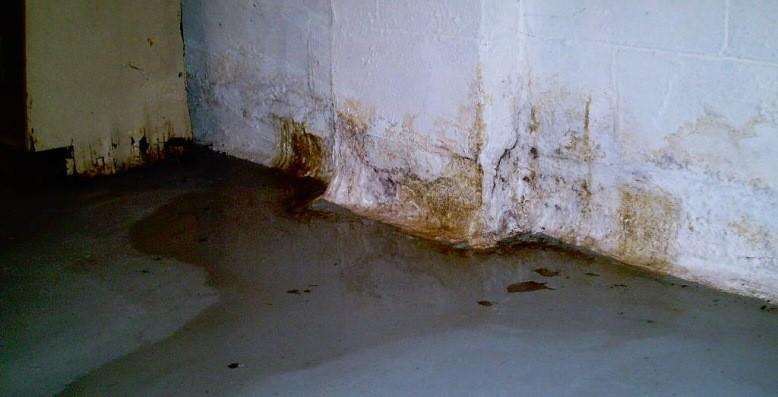 Управляющую организацию оштрафовали за сырость в подвале и антисанитарию