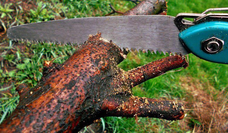 Уничтожая деревья, чиновники прикрываются реновацией